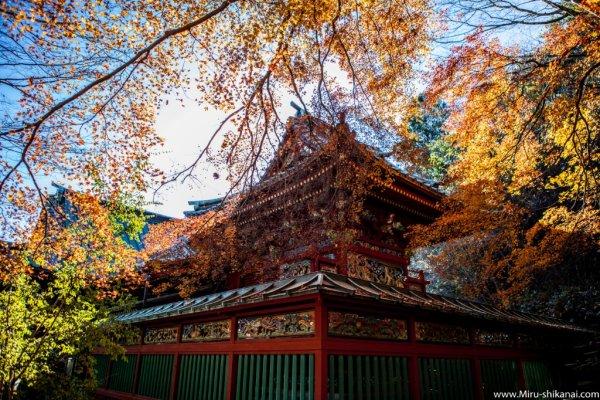 Les érables en feu - ©AU FIL DU JAPON