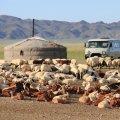 ACTIVE ET ADVENTURE TOURS MONGOLIA