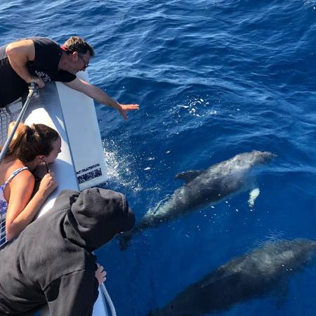Dolphins - ©MILOS ADVENTURES