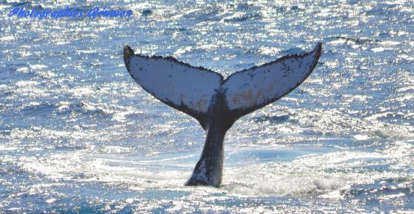 baleines réunion