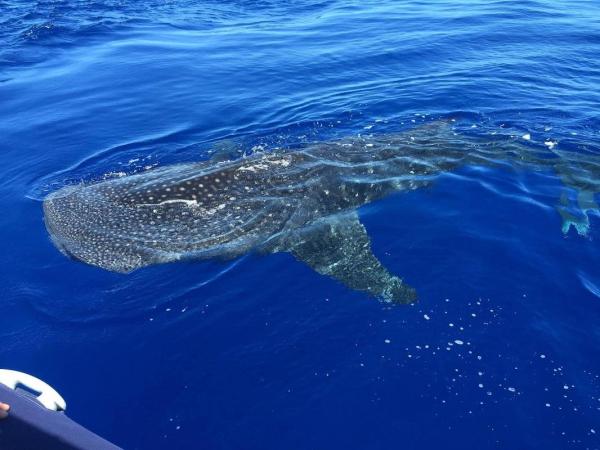 observation baleines