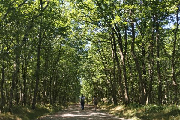 La Forêt de Buzet, poumon vert au porte de Toulouse en Coteaux du Girou - ©Tourisme Coteaux du Girou