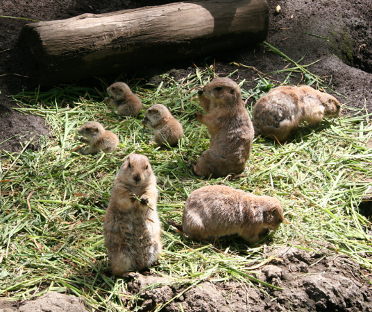 PARC PÉDAGOGIQUE Parc animalier – Ferme Saint-Nectaire photo n° 330636 - ©PARC PÉDAGOGIQUE