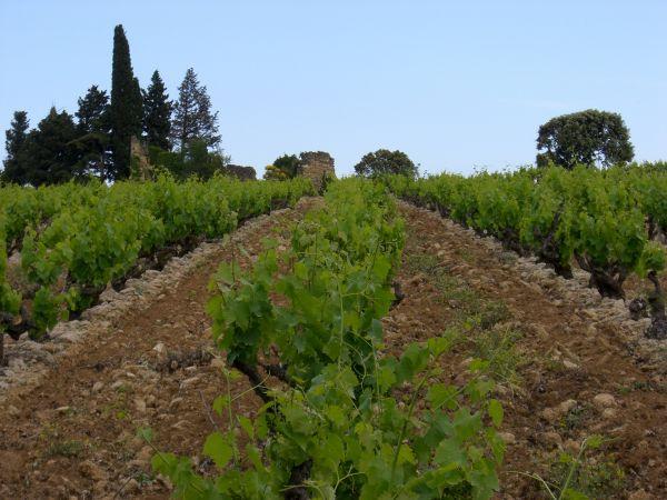 DOMAINE PAUL AUTARD Produits gourmands - Vins Courthézon photo n° 18019