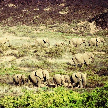 DAMARANA SAFARIS Agence de voyage - Tours opérateurs Swakopmund photo n° 188009 - ©DAMARANA SAFARIS