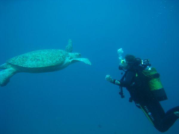 ODYSSEA DIVE Submarinismo – Apnea Vilanculos photo n° 69028