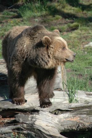 LE PARC ANIMALIER DES ANGLES Parc animalier – Ferme Les Angles photo n° 118011 - ©LE PARC ANIMALIER DES ANGLES