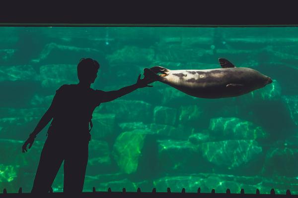 Aquavision Branféré - ©PARC ANIMALIER ET BOTANIQUE - PARCABOUT® DE BRANFÉRÉ