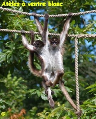 NATUR'ZOO DE MERVENT Parc animalier - Aquarium Mervent photo n° 13271 - ©NATUR'ZOO DE MERVENT