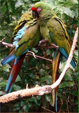 NATUR'ZOO DE MERVENT Parc animalier - Aquarium Mervent photo n° 13269 - ©NATUR'ZOO DE MERVENT