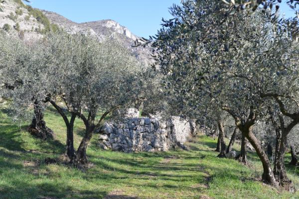 rando olivier