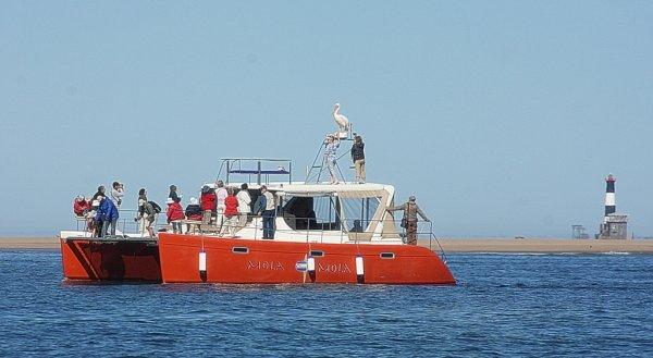 MOLA-MOLA Loisirs et sports nautiques Walvis Bay photo n° 152082 - ©MOLA-MOLA