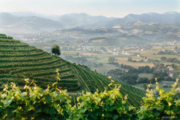Vignes d'Ascarat - ©LA CAVE D' IROULEGUY