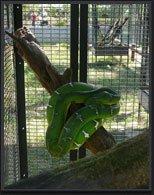 ZOO DE GUYANE Zoo Macouria photo n° 46097 - ©ZOO DE GUYANE