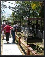 ZOO DE GUYANE Zoo Macouria photo n° 46098 - ©ZOO DE GUYANE