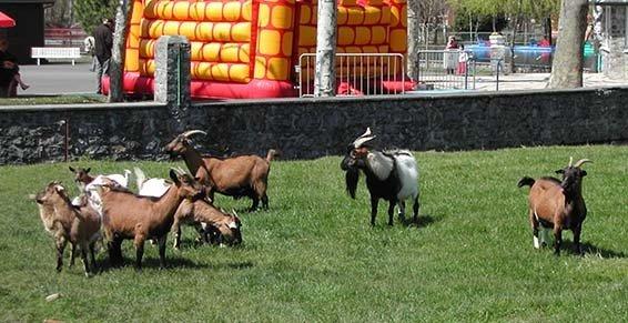 PARC DE LA DEMI-LUNE Parcs d'attractions Lannemezan photo n° 147355 - ©PARC DE LA DEMI-LUNE