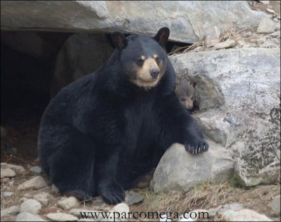 PARC OMÉGA Parc animalier - Aquarium Montebello photo n° 70684 - ©PARC OMÉGA