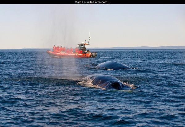 zodiac et baleine