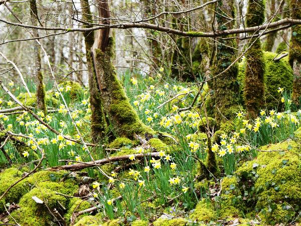 Val Vaubrien - ©©Marie Quiquemelle Parc national de forêts