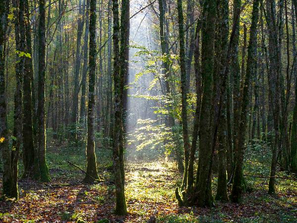 Forêts d'Arc en Barrois - ©Eric Girardot