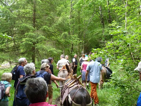 Balade avec des ânes de portage - ©Jean Michel Barbier Parc national de forêts