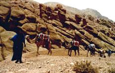 DÉSERT ET MONTAGNE Agence de voyage - Tours opérateurs Ouarzazate photo n° 45691 - ©DÉSERT ET MONTAGNE