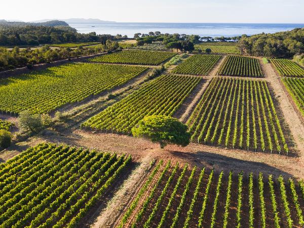 Les vignes du Domaines Ott* - Clos Mireille - ©Hervé Fabre