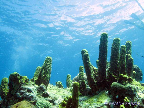 GWADA PAGAIE Loisirs et sports nautiques Bouillante photo n° 39205 - ©GWADA PAGAIE