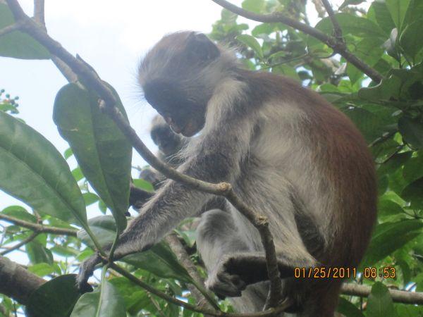 KOBE TOURS Agence de voyage - Tours opérateurs Zanzibar Town photo n° 42945 - ©KOBE TOURS