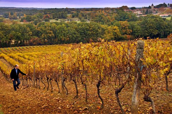 Vigne - ©ARMAGNAC DELORD