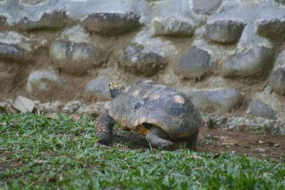 ZOO DE GUADELOUPE AU PARC DES MAMELLES Site naturel (avec horaires et-ou payant) Bouillante photo n° 47826 - ©ZOO DE GUADELOUPE AU PARC DES MAMELLES