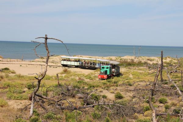 LE P'TIT TRAIN DE SAINT-TROJAN Bus – Petit train Saint-Trojan-les-Bains photo n° 143960 - ©LE P'TIT TRAIN DE SAINT-TROJAN