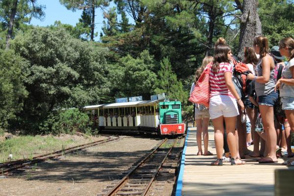 LE P'TIT TRAIN DE SAINT-TROJAN Bus – Petit train Saint-Trojan-les-Bains photo n° 207100 - ©LE P'TIT TRAIN DE SAINT-TROJAN