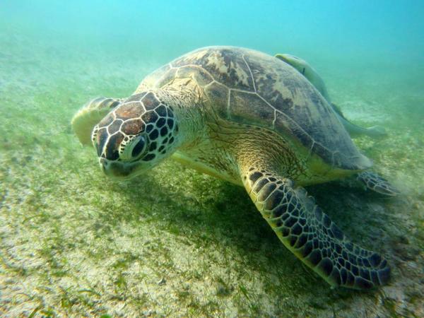Nage avec les tortue - ©LE JARDIN MAORÉ