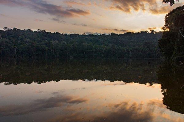 Thaki Amazonie