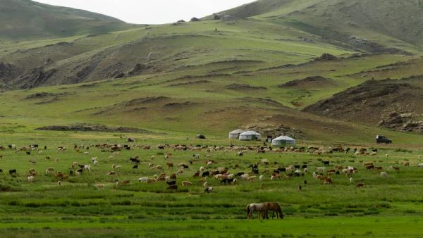 Campement nomade - ©HORSEBACK MONGOLIA