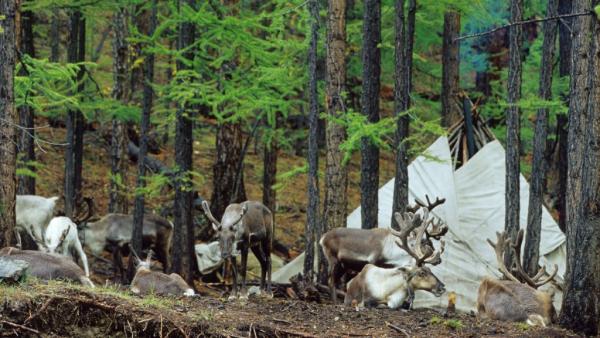 Éleveurs Tsaatans - ©HORSEBACK MONGOLIA