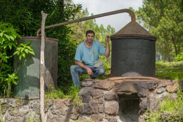 Distillation - ©LE LABYRINTHE EN CHAMP THÉ