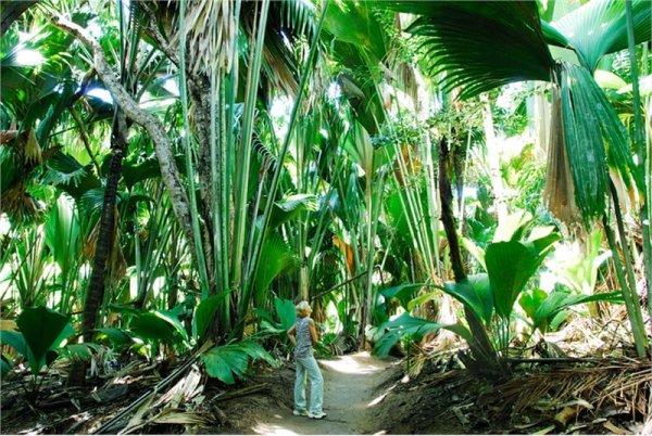 VALLEE DE MAI Natural site Parc National de Praslin photo n° 225296