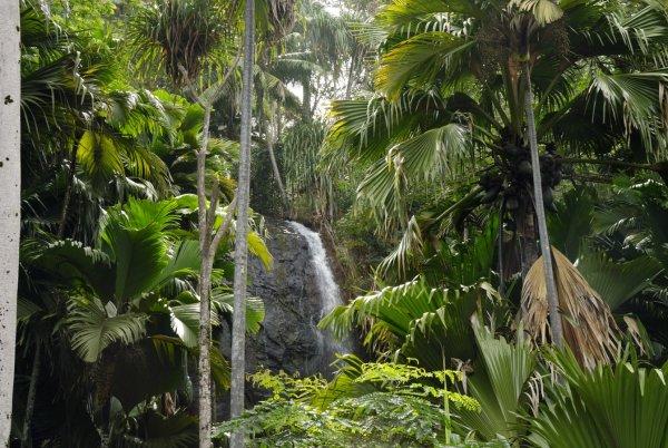 VALLEE DE MAI Natural site Parc National de Praslin photo n° 225297