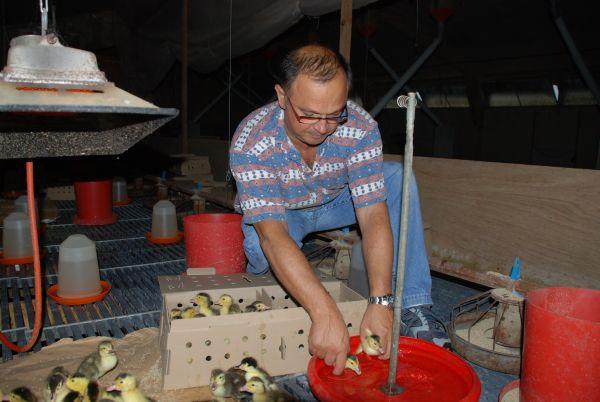 FERME DE LAS CRABÈRES Foie gras L'Isle-Jourdain photo n° 26544 - ©FERME DE LAS CRABÈRES
