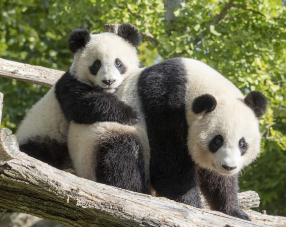 ZooParc de Beauva...