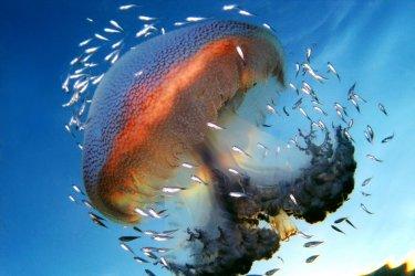2-australie-ningaloo-reef-me-duse-a-la-grande-barrie-re-de-corail-c-whitepointer
