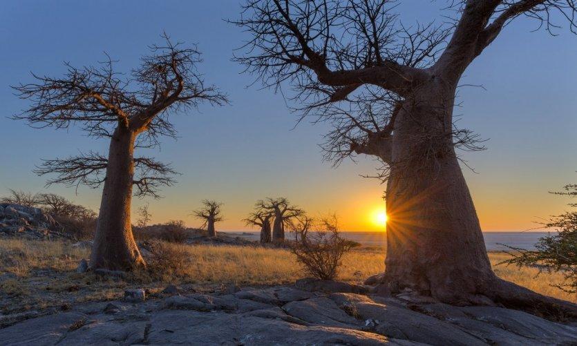 2-botswana-sunset-at-kubu-island-de-sert-du-kalahari-c-hannesthirion