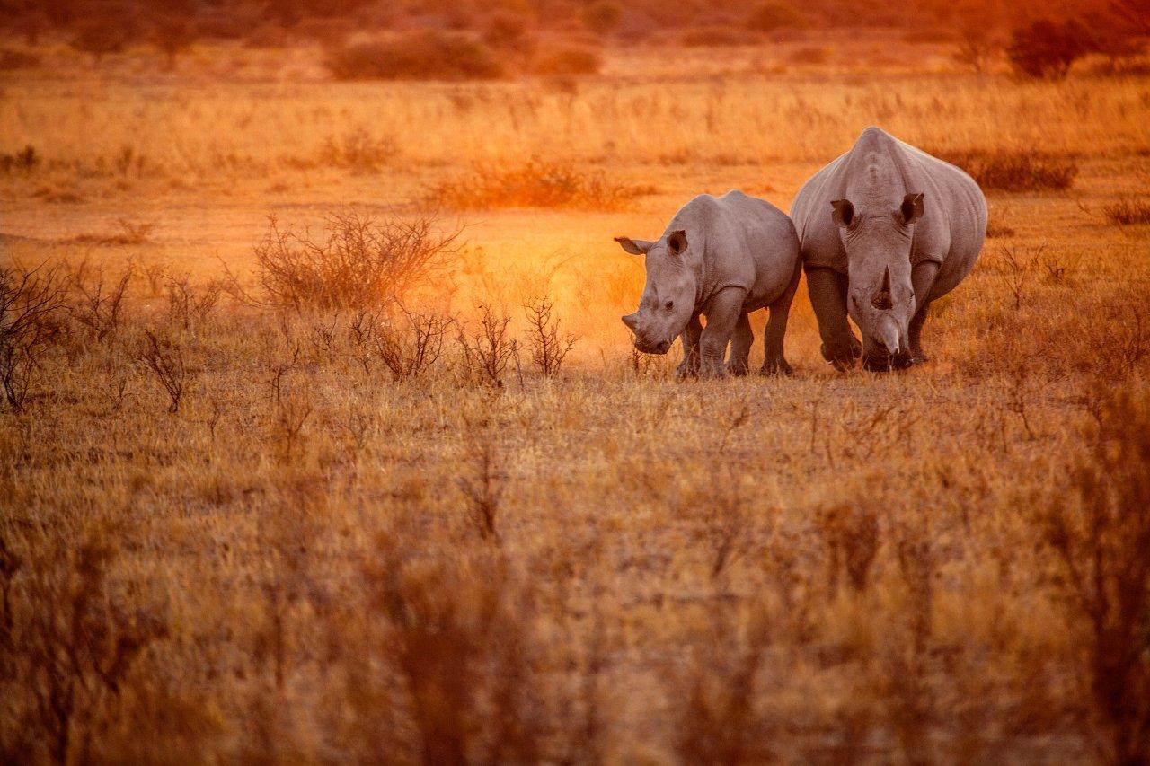 2-kenya-rhinoce-ros-au-lac-nakuru-c-2630ben