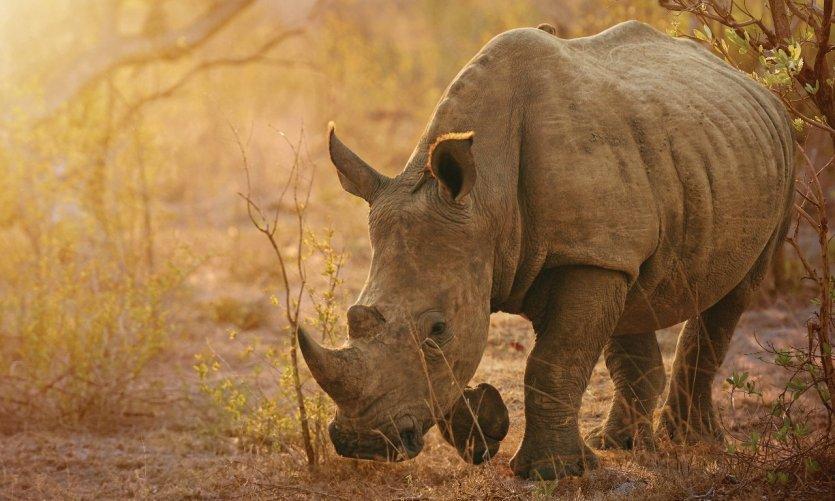 botswana-rhinoceros-c-peopleimages