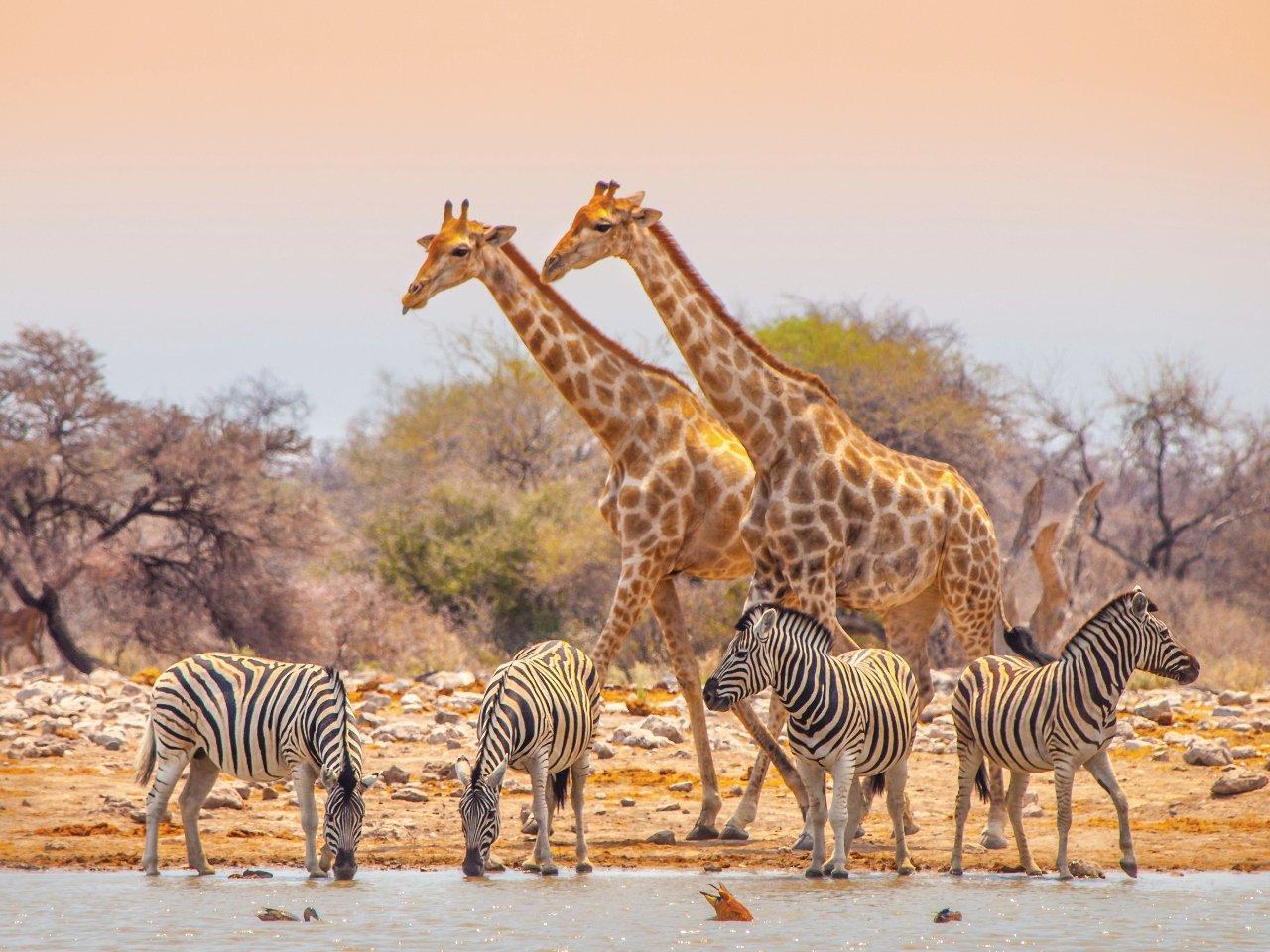 namibie-parc-d-etosha-c-pytyczech