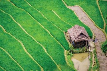 vietnam-dien-bien-phu-maison-sur-les-rizie-res-en-terrasse-c-anhtnn