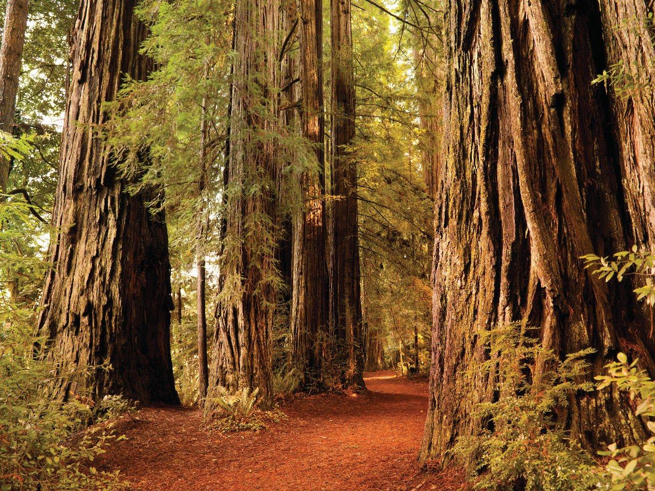 etats-unis-redwood-national-park-c-pgiam
