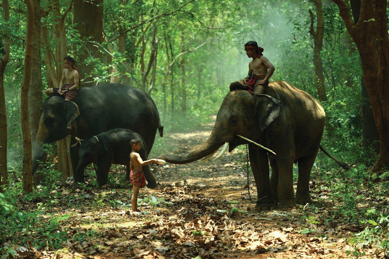cambodge-enfants-avec-les-e-le-phants-et-un-cornac-c-thanatasdcom